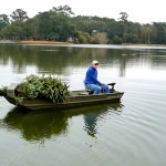 Christmas trees are dropped into Palmetto Lake to create new fish habitats.