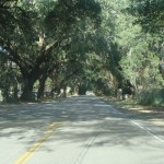 Charleston County is planting six live oak trees on Johns Island this week.