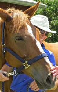 "Murray Neale (CATR Executive Director) and horse ""Sweet Girl."""
