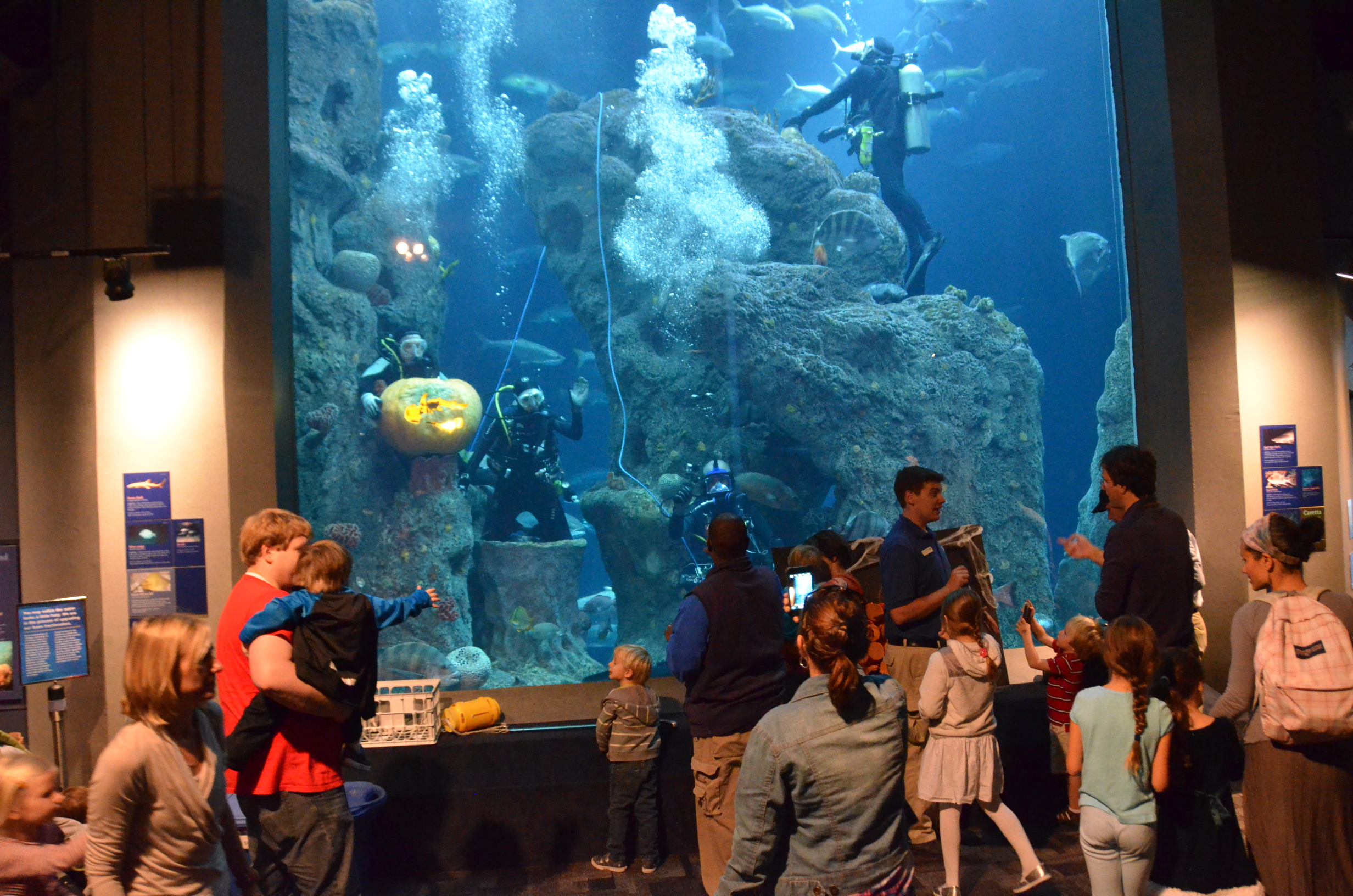 Celebrate The Sea Son At South Carolina S Aquarium The