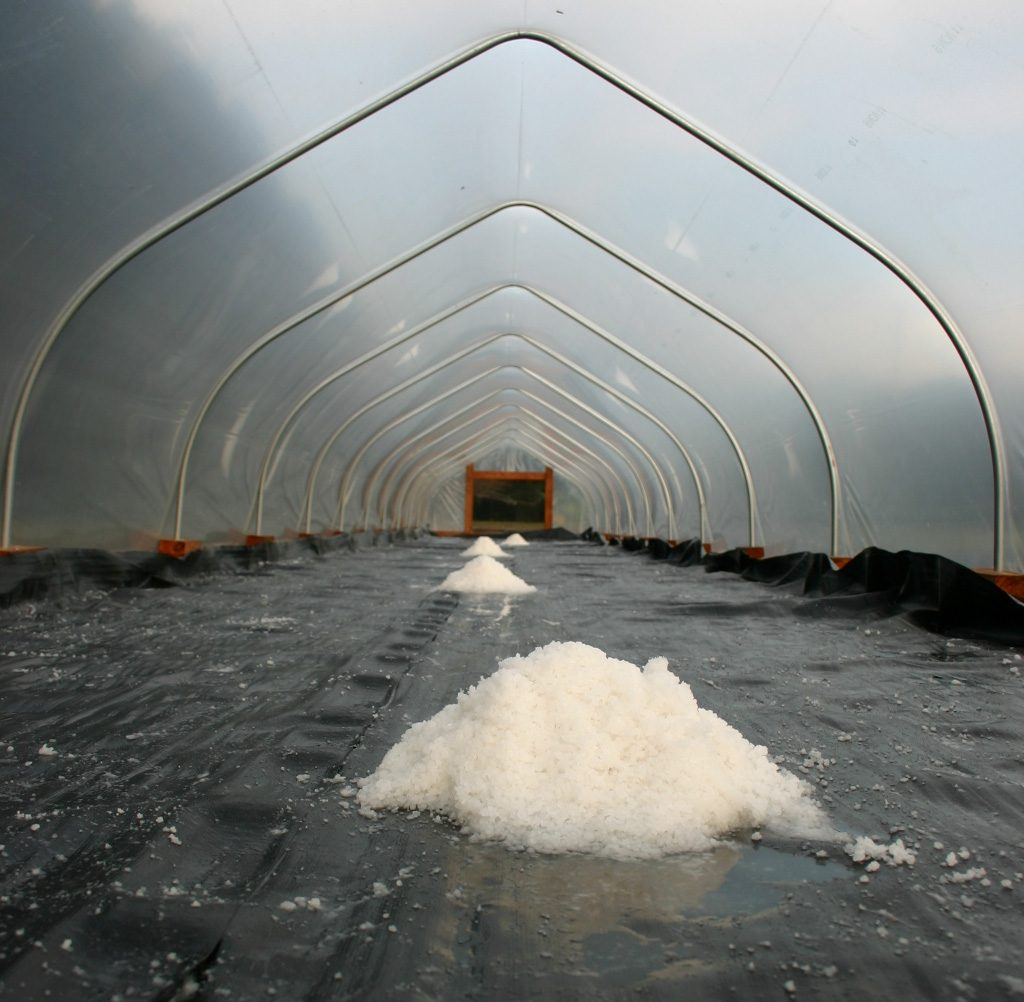 Freshly harvested salt